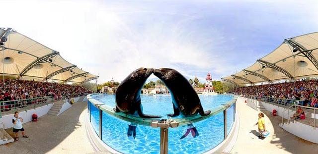 Apresentação de Golfinhos no Zoo de Lisboa