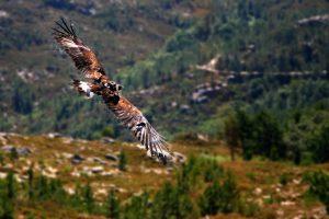 Fauna e Flora do Parque Nacional Peneda-Gerês